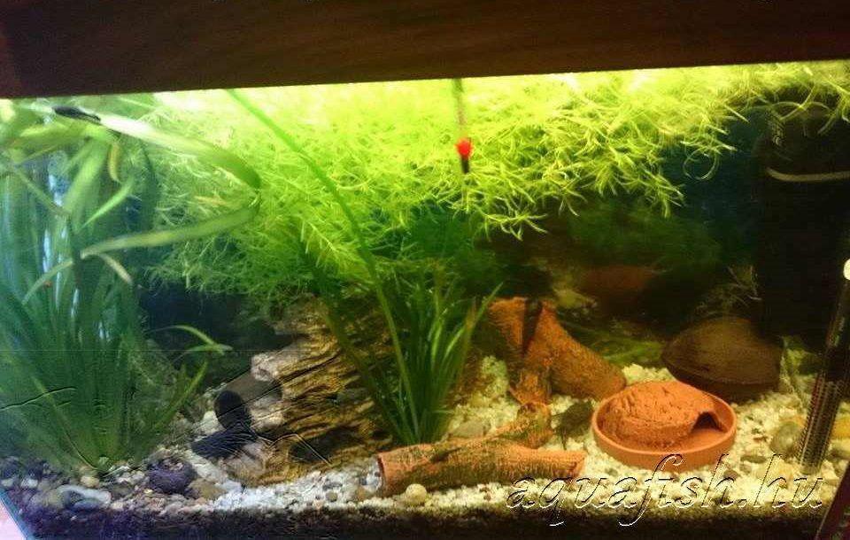 Csatári Zoltán akvárium