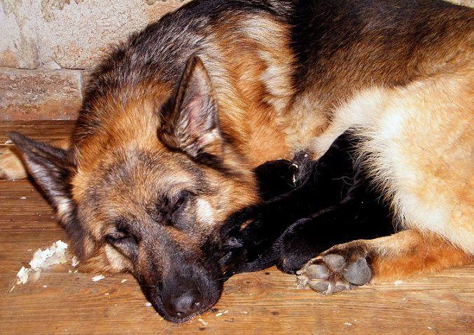 anya és a 3 kölyök